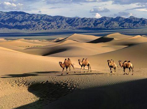 Mongolia/China : Gobi desert.