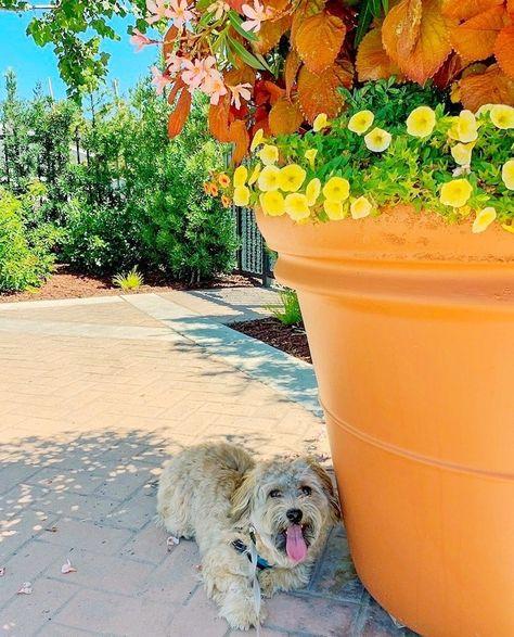 #dogs_of_world #dogmodel #cutevideos #puppypower #dogofig #dogspuppy #puppypaws #dogsofinstagram #puppymodel #ilovemyp... Happy #Friday everyone! #TGIF! . . #YourPetPartner #fridayfunday #fridayvibes #fridaymood #fridayfeels #dogsbeingfunny #... How many pictures do you need human?       #labrador_mob #labradorblelove #labradorfinstagram #labradorf...