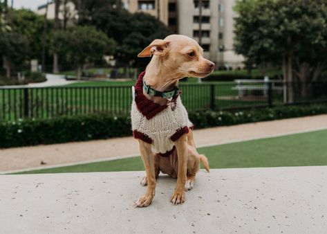 Red and Pink Striped Dog Sweater