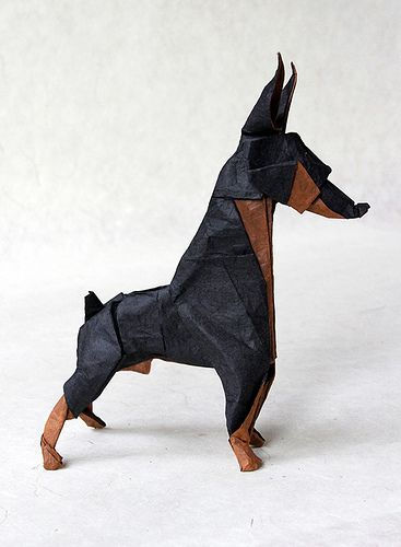 doberman pinscher | Diagram by Ares Alanya. Folded by me. Si… | Flickr