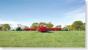 c061a0bf4e2b27b272eb6060a9281201 - Chapel Hill Gardens South Oak Lawn Il