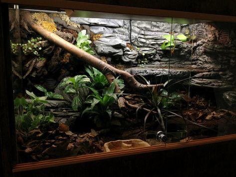 New ball python owner, DIY tank in the future Terrarium Diy, Terrarium Scene, Terrarium Reptile, Turtle Terrarium, Glass Terrarium, Reptile Habitat, Reptile Room, Reptile Cage, Vivarium