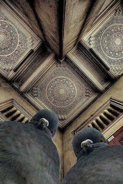A photographer tried to shoot the ceiling and pigeons happened.