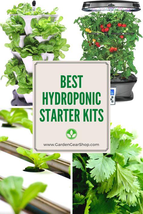 Hydroponic Starter Kit for Beginners