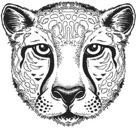 Fyi Color With Music Coloring Books Just Slashed Their Prices Cheetah Face Line Drawing Vector Sketch