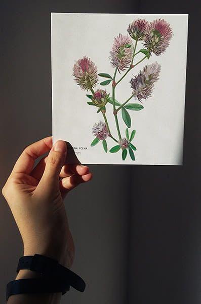Komplet 12 Dekoracyjnych Kart Kwiaty Polne 15cmx17cm Flower Drawing Decorative Card Wild Flowers