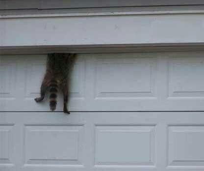 Garage Door Pictures Funny Sevenstonesinc