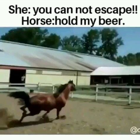 OMG! This horse has great skills - Horses Funny - Funny Horse Meme - #horsememe #horse #funnyhorse -  My question is why didn't the horse just jump OVER the fence?  The post OMG! This horse has great skills appeared first on Gag Dad.