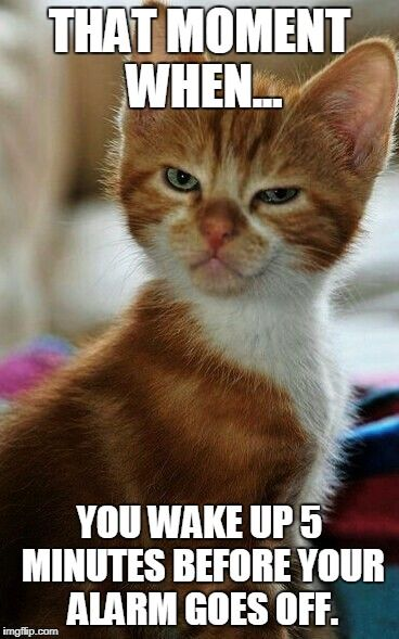 Oh My Gosh This Is Too True Pretty Cats Cute Cats Kittens Cutest