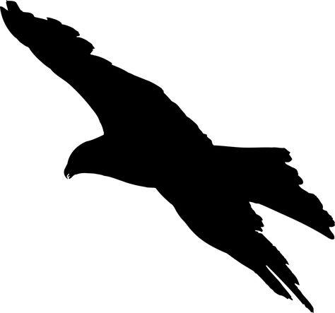 Gratis Billede Pa Pixabay Dyr Fugl Orn Favoritter Silhuet Med Billeder Silhuet Dyr Fugle