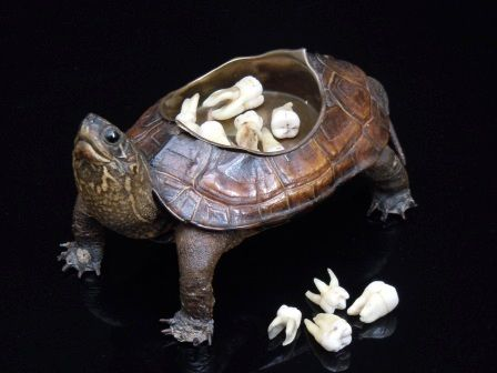 19th Century Taxidermy Terrapin (which would have originally been