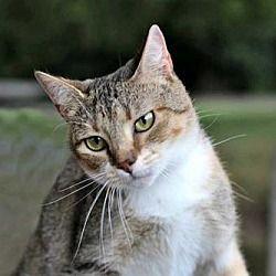 Pet Card Pet Adoption Pets Cats