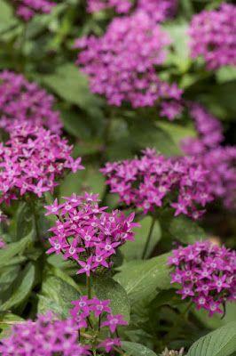 Star Nursery Summer Flowers