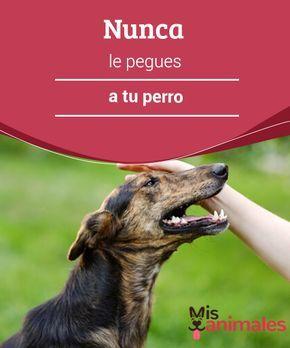 Tipos De Collares De Castigo Para Perros Nunca Le Pegues A Tu Perro Perros Adiestramiento Perros