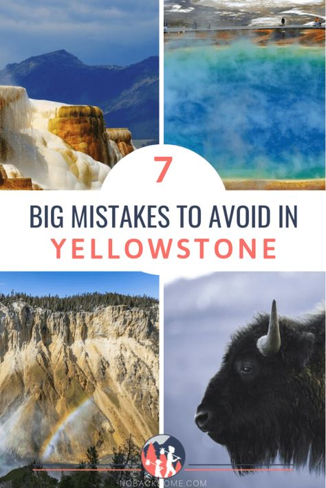 If you are planning a trip to Yellowstone National Park you are going to want to avoid these huge mistakes. Here is what you should NOT do when visiting Yellowstone. Bonus: Where to stay in Yellowstone Yellowstone Nationalpark, Visit Yellowstone, Yellowstone Vacation, Yellowstone Park, Yellowstone Attractions, West Yellowstone Montana, National Parks Usa, Grand Teton National Park, Wyoming Vacation