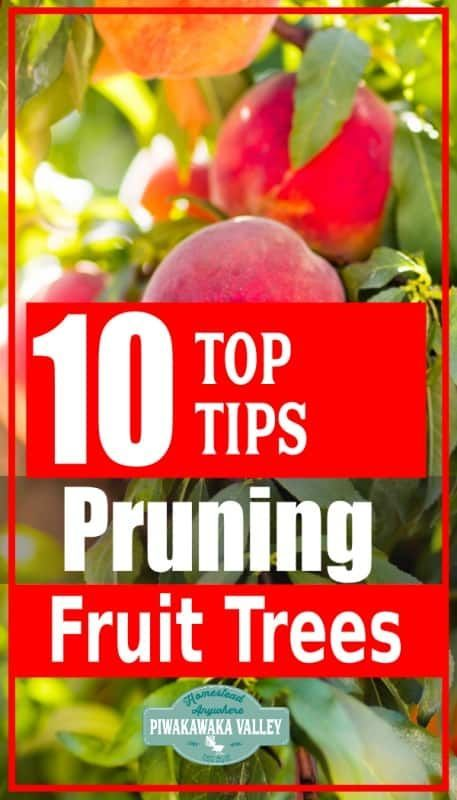 How To Prune Fruit Trees In Winter In Your Backyard Orchard Apple Peach Plum Apricot Fruit Trees Prune Fruit Prune