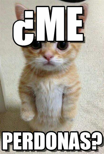 Memes Graciosos Perdon Gatitos Divertidos Meme Gato Gato Gracioso