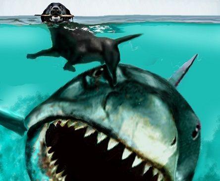 Jaws Artwork By Federico Alain Shark Photos Shark Art Jaws Movie