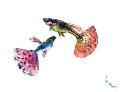 Guppy Fish Giclee Print Suren Nersisyan Art Com In 2020 Fish Wall Art Fish Illustration Fish Drawings