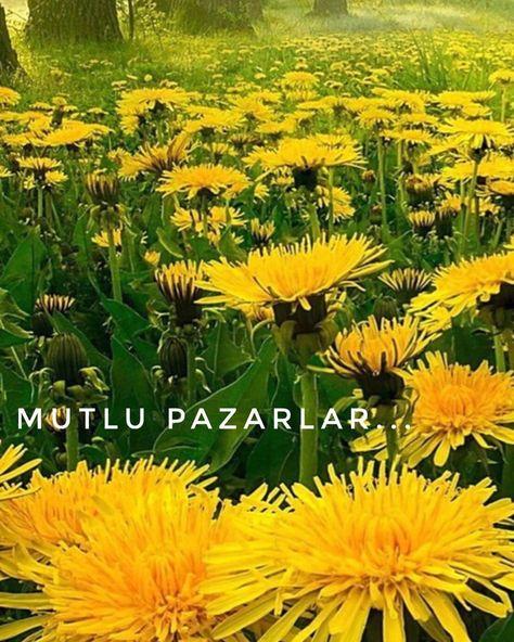 "SerapOnur on Instagram: ""☀️💗🦋🌼🌸🌲#mutlupazarlar #sunday #happyday #instapic #nature #seraponur"""
