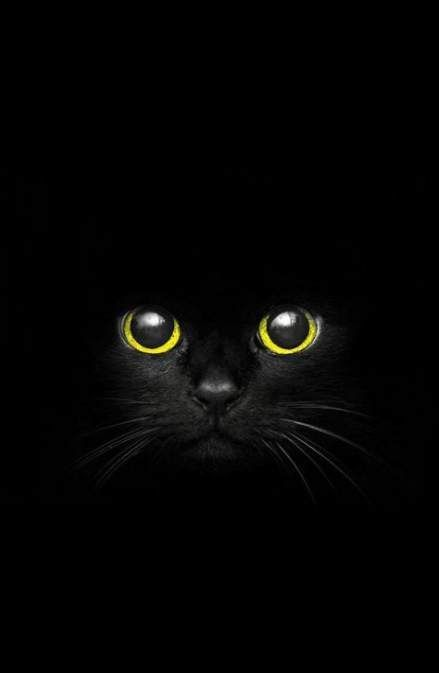Super Cats Face Wallpaper Ideas Cat Photography Black Cat Art Cat Wallpaper Cool cat eyes wallpaper