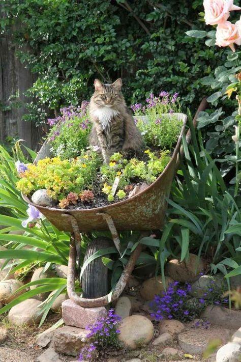 décoration jardin en brouette rouillée gardé par un chat mignon