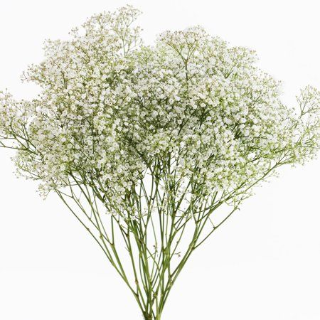Pin By Phitaktharaphongphachara On Wedding Hairstyles In 2020 Fresh Flowers Babys Breath Different Flowers