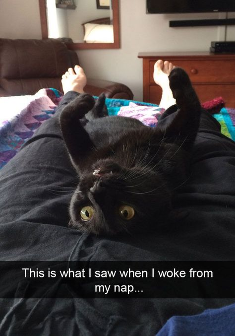 25+ Hilarious Cat Snapchats That Will Leave You With The Biggest Smile (New Pics) #CatCute