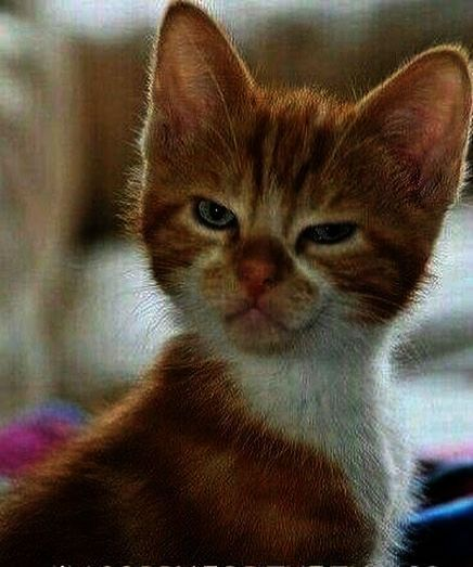Cats And Kittens Sale Bristol Cat And Her Kittens Cute Funny Animals Funny Cats Funny Animal Memes
