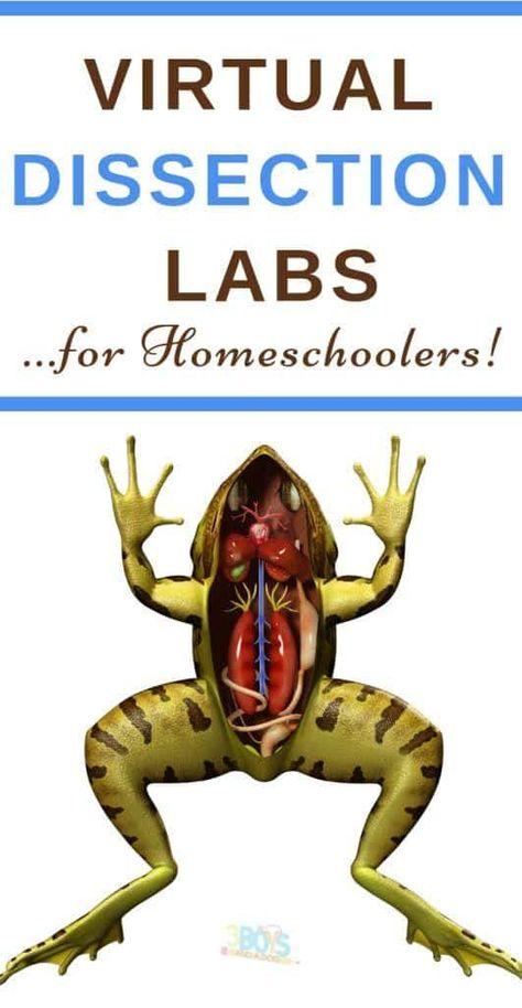Homeschool science curriculum - Virtual Dissection and Science Labs for Homeschoolers – Homeschool science curriculum Science Lessons, Teaching Science, Science For Kids, Science Activities, Science Labs, Free Activities, Life Science, Science Fun, Science Classroom