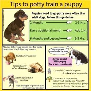 Dog Training Collar Metal Dog Training 101 Videos Dog Training