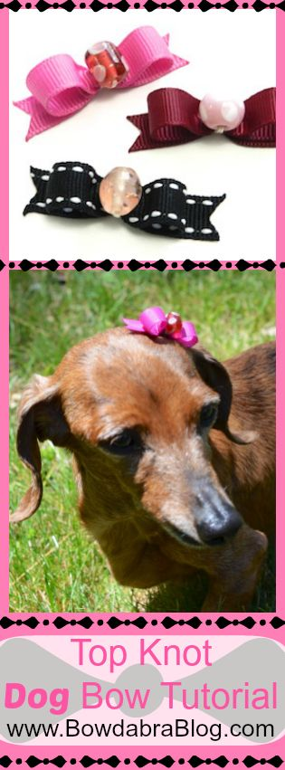 Most Inspiring Hair Bows Bow Adorable Dog - c0f1e2f27c1dc018e8883bb3840c8c3f--pet-grooming-grooming-salon  Pic_776959  .jpg