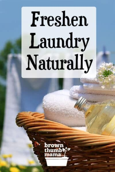 Naturally Freshen Stinky Laundry In 2020 Green Cleaning Recipes
