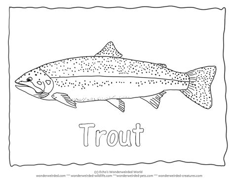 """Rainbow Trout Image to Color 3  Trout Coloring Page  with Trout Outline Pictures , Rainbow trout picture  fish with outline font of the word """" Trout"""" added"""