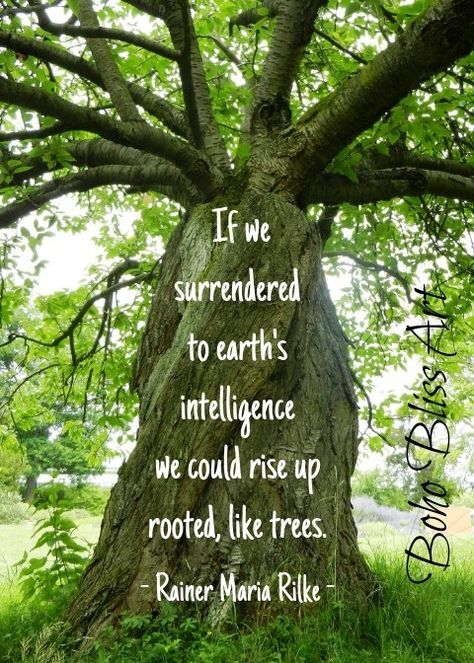 Rainer Maria Rilke Quote | Quotes About the splendor of trees. #QuotesAboutTrees #TreeQuotes
