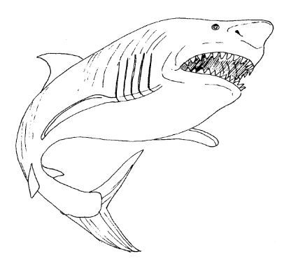 Great White Shark Coloring Page Free Shark Coloring Pages Animal Coloring Pages Coloring Pictures