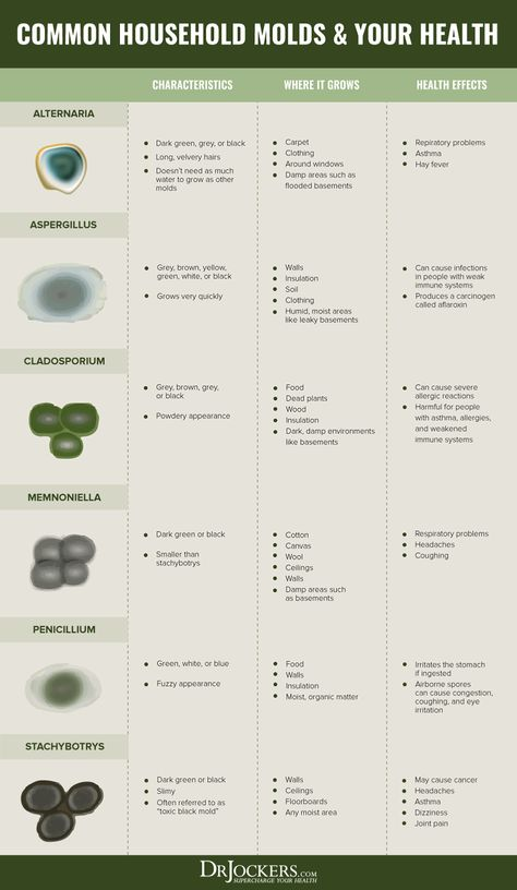 Black Mold Indoor Air And Health Effects Drjockers