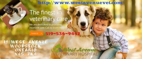 West Avenue Veterinary Hospital In Woodstock On Offer Complete Pet Health Care Services Our Experienced Veteri Pet Clinic Veterinary Hospital Animal Hospital