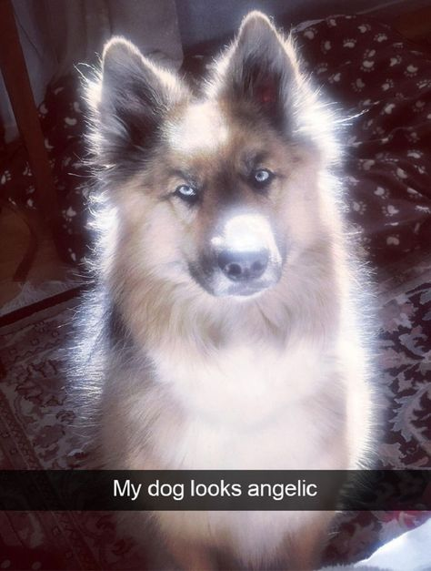 Funny and Cute Dog Snapchat Photos   Cute overload - BabaMail