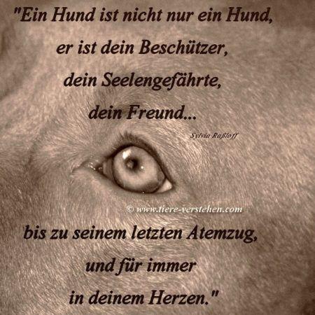 Zeit des Abschieds… – Tiere-Verstehen.com – Tierkommunikation, Tierpsychologie & Energetik