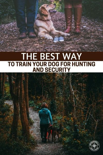 The Best Way To Train Your Dog For Hunting And Security Puppy