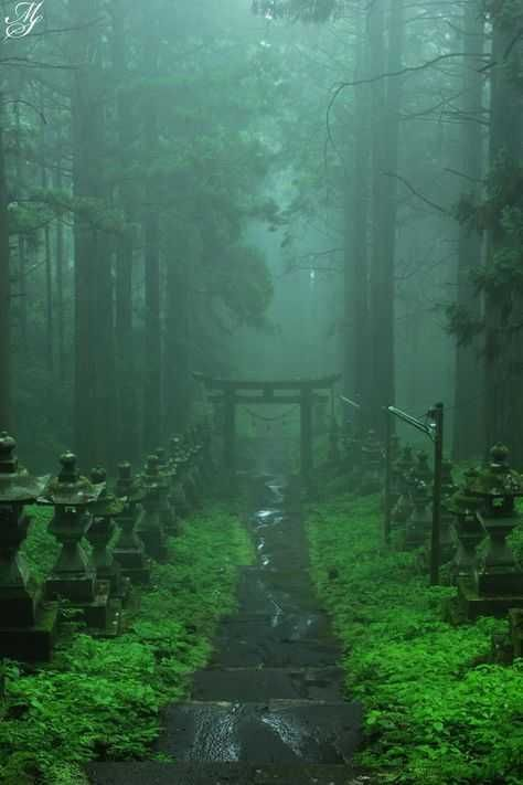 Colored Kumanoza Shrine on the drizzle- 霧雨の上色見熊野座神社 Misty Forest-Kamishikimi-kumanoimasu-jinja shrine, Kumamoto - Beautiful World, Beautiful Places, Beautiful Pictures, Beautiful Scenery, Japanese Landscape, Japanese Nature, Animes Wallpapers, Abandoned Places, Japan Travel