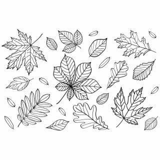 Fall Leaf Outline Png Fall Leaves Outline Clipart Fall Png 621308 Pngtube Leaf Outline Leaf Coloring Page Leaf Images