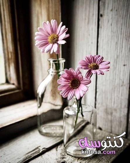 خلفيات ورود جميلة جدا اجمل خلفيات ورودرومانسيه Still Life Flowers Flowers Photography Rock Flowers
