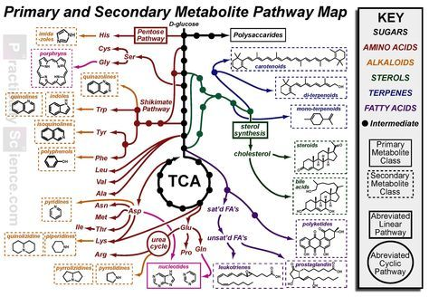 """A """"Chemical-Structure Map"""" of the Metabolome"""
