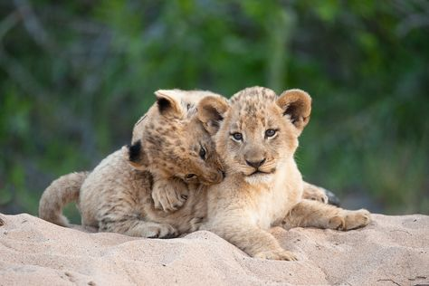 500px » 30 Cute Baby Animal Photos Found In The Wild