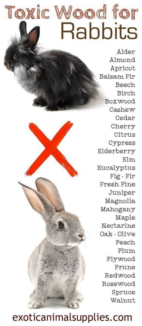 Pin By Talee Franks On Rabbits Pet Rabbit Care Pet Bunny