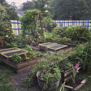c15d530a6719b25469fd056c22c7b980 - What Is The Importance Of Urban Gardening