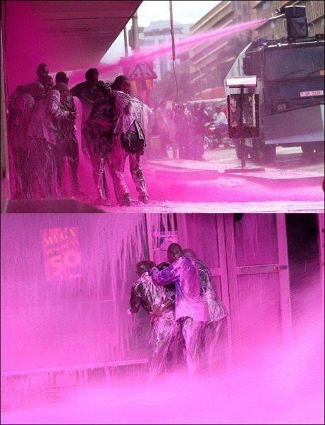 cops spray them pink lol - pigsarefunny.com