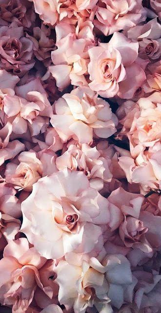 Fondo de Pantalla de Plantas y flores  #fondos #wallpaper #flores